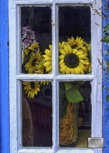 SunflowerWindow